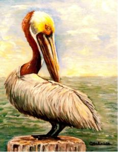 """Pelican at Rest"" Gulf Waters"