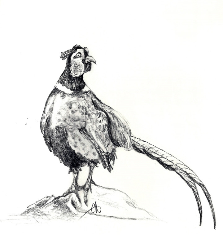 Wary Pheasant