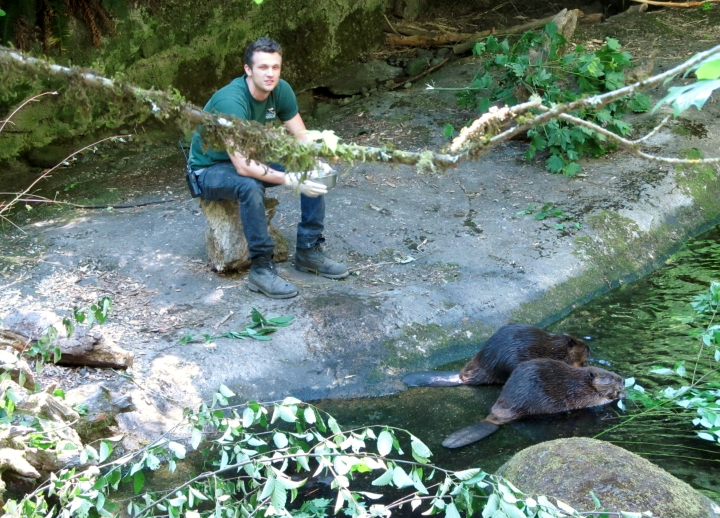 Chris hand-feeding some beavers.