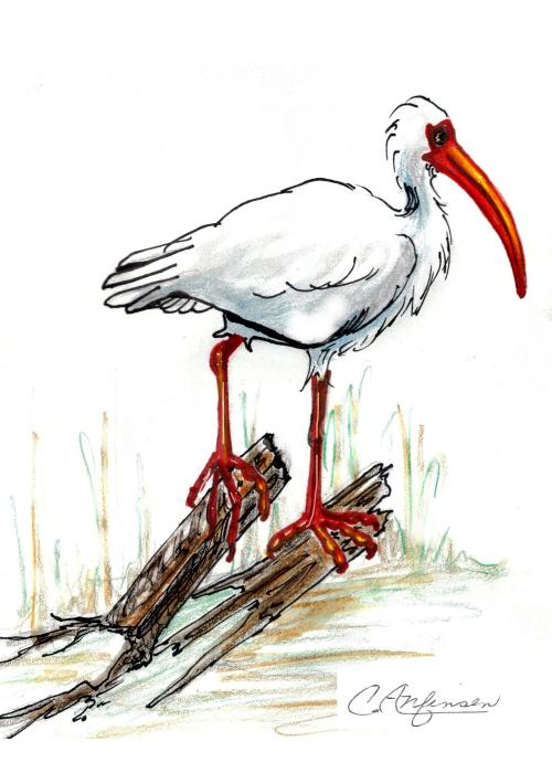 """Ibis on a Perch"" original drawing"