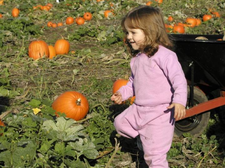 kayla-pumpkins-03
